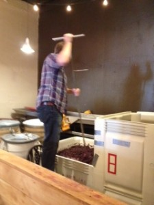Jim Fischer punching down Fossil & Fawn whole cluster pinot noir.